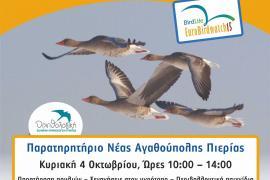 Γιορτή πουλιών 2015 Ν. Αγαθούπολη