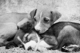 Παροχή κτηνιατρικών υπηρεσιών στα αδέσποτα ζώα συντροφιάς του Δήμου Πύδνας-Κολιν